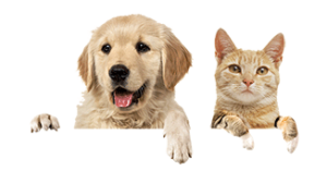 Get Your Paws On Pet Insurance